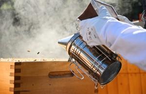 Kurz pro začínající včelaře