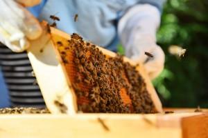 Kurz pro mírně pokročilé včelaře